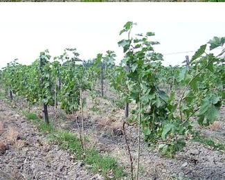 Продам виноградник в грузии дубай квартиру купить