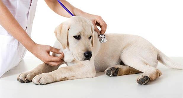 Ветеринарная клиника продажа бизнеса работа сергиев посад свежие вакансии разнорабочий
